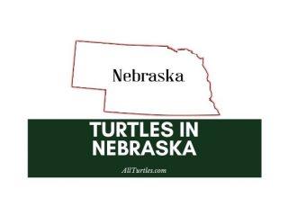 Turtles in Nebraska