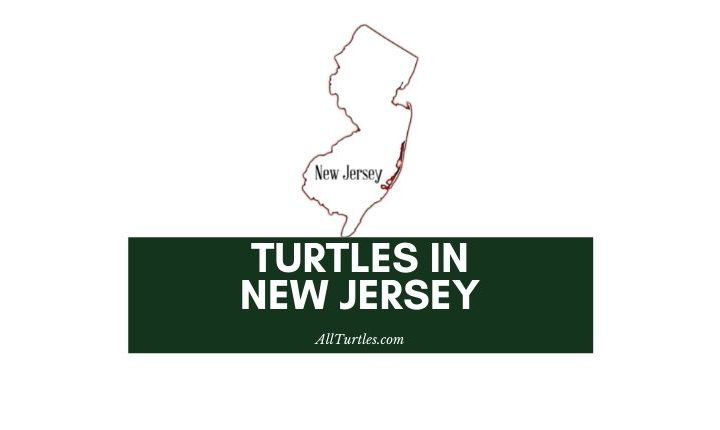 Turtles in New Jersey