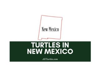 Turtles in New Mexico