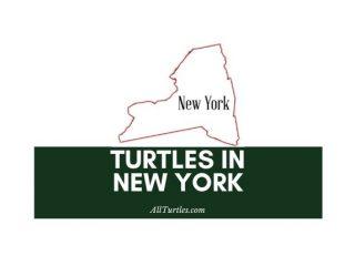 Turtles in New York