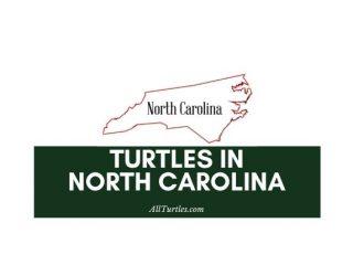 Turtles in North Carolina