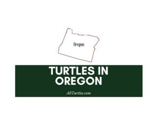 Turtles in Oregon