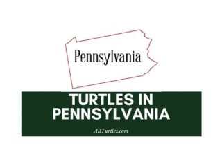 Turtles in Pennsylvania