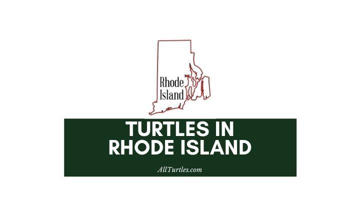 Turtles in Rhode Island