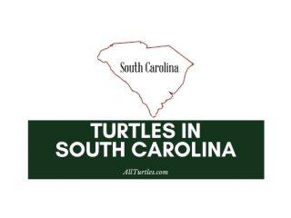 Turtles in South Carolina