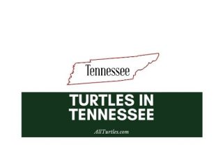 Turtles in Tennessee