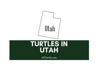 Turtles in Utah