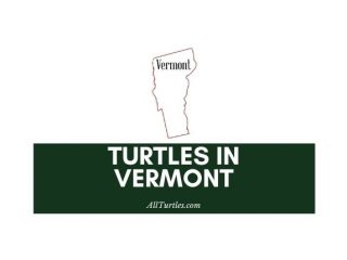Turtles in Vermont