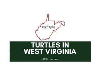 Turtles in West Virginia