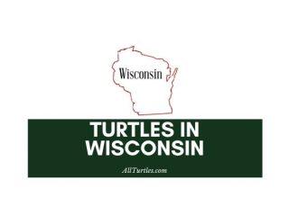 Turtles in Wisconsin