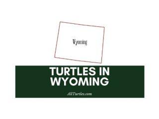 Turtles in Wyoming
