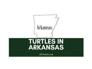 Turtles in Arkansas