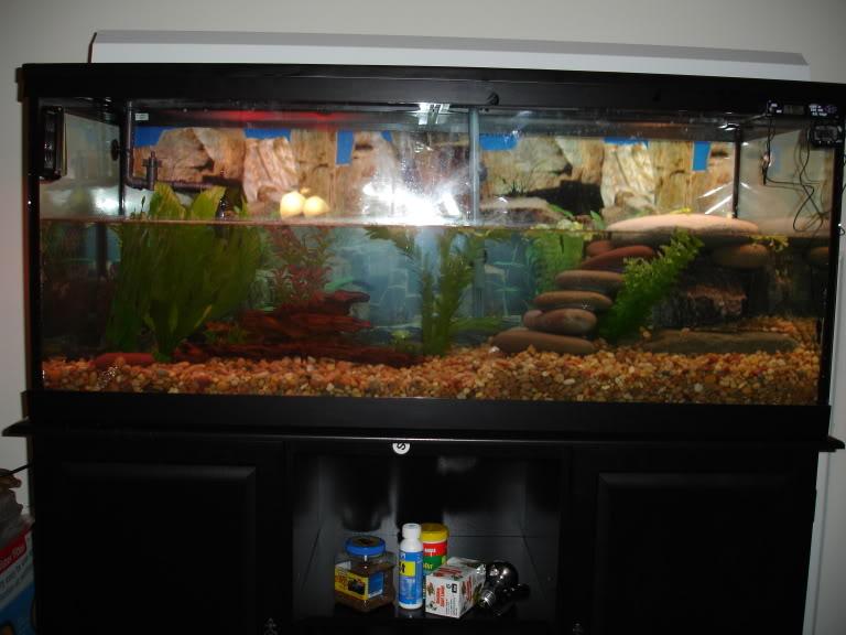 water turtle tank setup   all turtles