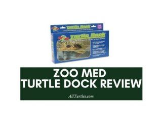 zoo med turtle dock review