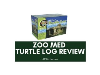 Zoo med pet turtle log review