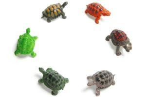best-pet-tortoises