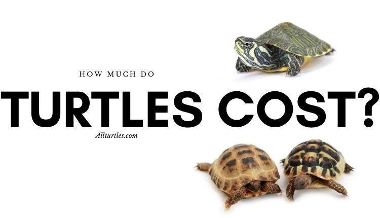 how much do turtles cost