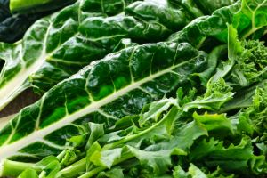 leafy greens for box turtles