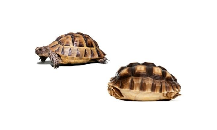 tell turtles appart