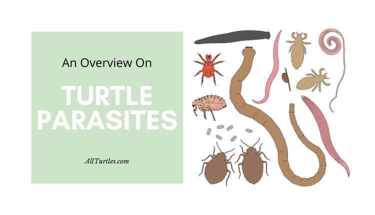 turtle parasites