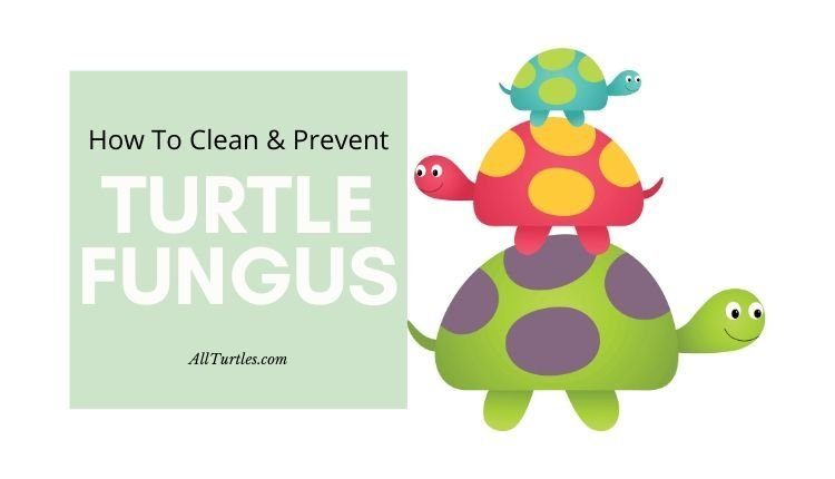 turtles fungus